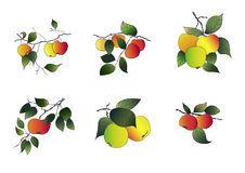 Apples set Royalty Free Stock Images