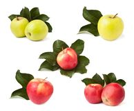 Apples set Stock Image