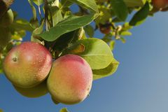 Apples and sky Stock Photography