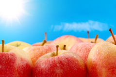 Apples on sky background. With sun Stock Image