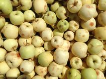 Apples. Small apples in kurdistan markets stock images