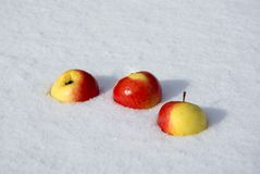 Apples in the snow Stock Images