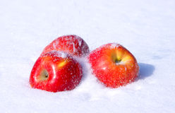 Apples in snow. The image of apples on snow during a snowfall Stock Image