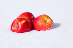 Apples in snow. The image of red Apples in snow Stock Photography