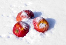 Apples in snow. The image of apples on snow during a snowfall Royalty Free Stock Photos