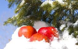 Apples in snow. Against the sky and a fur-tree branch Royalty Free Stock Image
