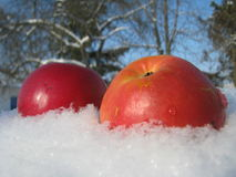 Apples on snow Stock Photography