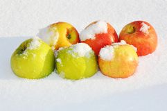 Apples in the snow Stock Photography