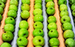 Apples sorting and packing. Delicious green apples and one red in packing tub at fruit warehouse Stock Photos