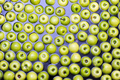 Apples sorting and packing. Delicious green apples and one red in packing tub at fruit warehouse Stock Images