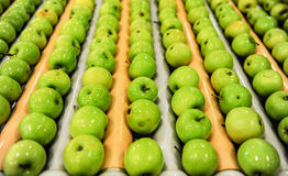 Apples sorting and packing. Delicious green apples and one red in packing tub at fruit warehouse Royalty Free Stock Photo