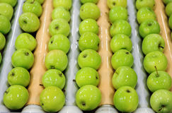 Apples sorting and packing. Delicious green apples and one red in packing tub at fruit warehouse Stock Image