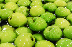 Apples sorting and packing. Green delicious apples in packing tub at fruit warehouse Royalty Free Stock Images