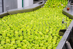 Apples sorting and packing Stock Photography