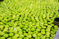 Apples sorting and packing. Green delicious apples in packing tub at fruit warehouse Royalty Free Stock Photography