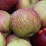 Apples. Stock of delicious red-green apples Stock Images
