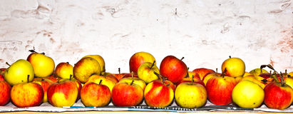 Apples are stored in the cellar. To keep fresh Royalty Free Stock Photo
