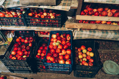 Apples stored for winter. Boxes full of red organic apples stored in a room for winter time Stock Images