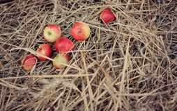 Apples and straw Stock Photo