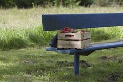 Apples, strawberries and pears in an old wooden crate. On a blue bench Stock Photography