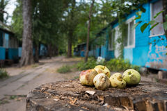 Apples on Stump. Some wild apple on a stump in a forest Royalty Free Stock Photos