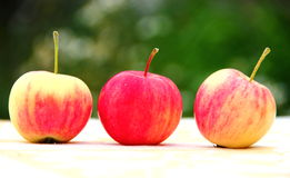 Apples. Three red-yellow apples on table with blur green background Royalty Free Stock Image