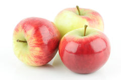 Apples. Three shiny fresh red Elstar apples (Malus domestica), on a white background royalty free stock photos