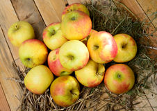 Apples to make cider Royalty Free Stock Photography