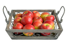 Apples on a tray Stock Photography