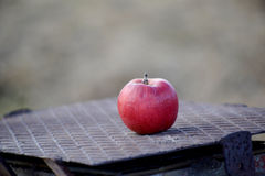 Apples on a tree in december Royalty Free Stock Photos