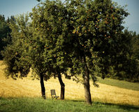 Apples trees with ripe apples and chair. Apples trees with ripe apples and a chair Royalty Free Stock Images