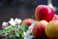 Apples und appel flower. Äpfel und Apfelblüte Stock Photos