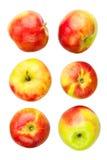 Apples various Stock Photos
