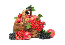 Apples, viburnum berries and chokeberry in a basket on a white b Royalty Free Stock Photo