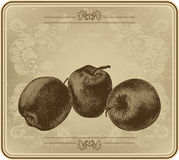 Apples with vintage frame, hand-drawing. Vector illustration. Royalty Free Stock Photo