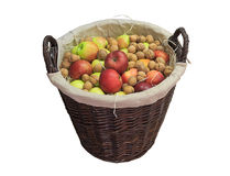 Apples and walnuts in a wicker basket. Isolated on white background royalty free stock photography