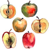 Apples. Watercolor hand painted illustration apples. Vector format Royalty Free Stock Images