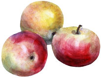 Apples , watercolor Royalty Free Stock Photography