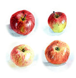 Apples #2. Watercolour sketch of four apples Stock Image