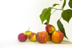 Apples on a white background royalty free stock photo