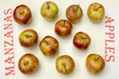 Apples. On white background,  in Spanish and English Royalty Free Stock Photography