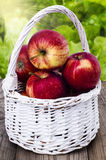 Apples in a white wicker basket. On a wooden table  in the garden Royalty Free Stock Photos