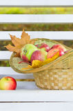 Apples in wicker basket Royalty Free Stock Photo