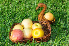 Apples. Apples in a wicker basket on the grass stock photography
