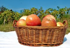 Apples in wicker basket. Photography of apples in wicker basket with nature and blue sky in background royalty free stock photography