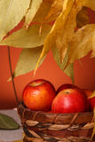 Apples in a wicker basket Stock Image