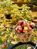 Apples in wicker basket Royalty Free Stock Photos