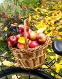 Apples in wicker basket Stock Images