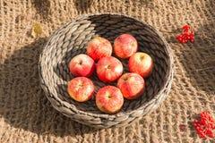 Apples in a wicker basket. Ripe apples in a wicker basket royalty free stock image