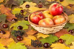 Apples in a wicker basket Royalty Free Stock Photos